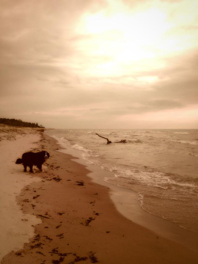 Boo and Lake Michigan